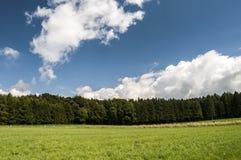 Forêts et prés Photographie stock libre de droits