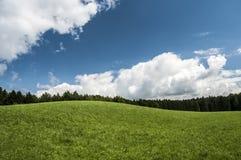 Forêts et prés Photographie stock