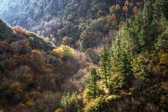 Forêts mélangées, conifére et à feuilles caduques Photo libre de droits
