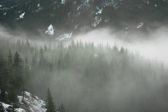 Forêts, pleines des nuages déprimés Photo libre de droits