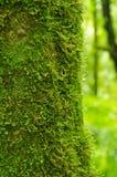 Forêts tropicales Image libre de droits