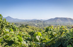 Forêts tropicales de Palawan Photo stock