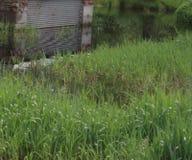 Fora, árvores, água, inundação, grama, jarda fotos de stock