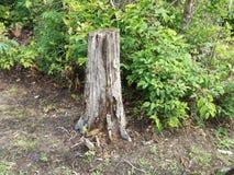 Fora, coto de árvore Rotted, grama, flores selvagens, fora, árvores, samambaias imagens de stock