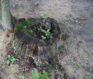 Fora, coto de árvore Rotted, grama, flores selvagens, fora, árvores, samambaias imagens de stock royalty free