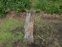 Fora, coto de árvore Rotted, grama, flores selvagens, fora, árvores, samambaias fotografia de stock