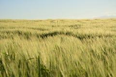 Fora da cidade - paisagem rural - um campo Imagens de Stock