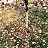 fora da flor Imagem de Stock