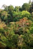 Fora da floresta úmida, Chiang Mai, Tailândia Imagens de Stock Royalty Free