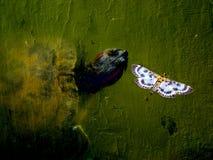 Fora da tartaruga do cimento e de uma borboleta Fotografia de Stock