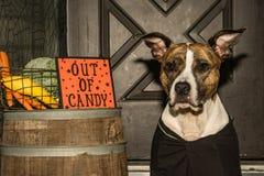 Fora dos doces de Dia das Bruxas Fotografia de Stock