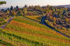 Fora outono Autumn Orange Yellow Gre da paisagem do vinhedo Imagem de Stock