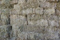 Forage grasses Stock Images