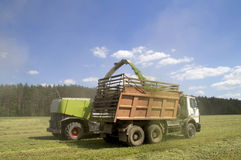 Forage kombain loads of chopped herbs in heavy vehicles Royalty Free Stock Photos