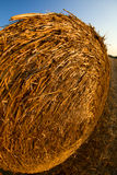 Forage round bales Royalty Free Stock Images