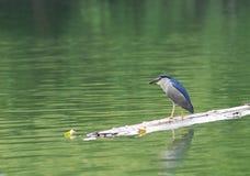 Forager d'oiseau Photos libres de droits