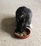 Foraggiamento del coniglio Immagine Stock Libera da Diritti