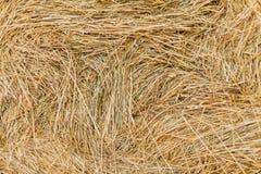 Foraggio del fieno per bestiame Fotografie Stock Libere da Diritti