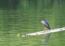 Foraging för fågel Royaltyfria Foton