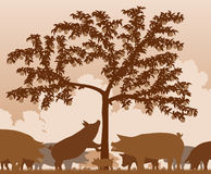 Foraging pigs. Editable vector illustration of free-range pigs feeding under an apple tree with all figures as separate objects Stock Images