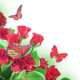 Foral background and  butterfly Royalty Free Stock Photography