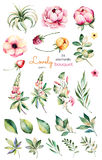 Foral collection with flower,peonies,leaves,branches,lupin,air plant,field bindweed,strawberry and more. Colorful collection with 24 watercolor elements.Set of Royalty Free Stock Photography