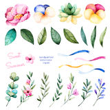 Foral collection with flowers, peony, leaves, branches, succulent plant, pansy flowers, ribbons and more. vector illustration