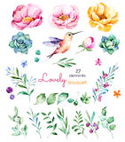 Foral collection with flowers,roses,leaves,branches,berries,succulents, hummingbird and more Stock Image