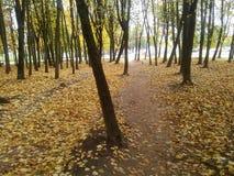 Forawalk on autumn Royalty Free Stock Photography