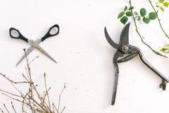 Forbici del giardino sui rami di un fondo di bianco delle piante Immagini Stock