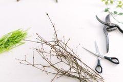 Forbici del giardino sui rami di un fondo di bianco delle piante Immagine Stock Libera da Diritti