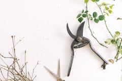 Forbici del giardino sui rami di un fondo di bianco delle piante Fotografia Stock