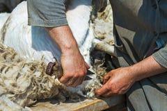 Forbici della mano di tosatura delle pecore Fotografia Stock Libera da Diritti