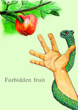 Forbidden fruit plucking Royalty Free Stock Photography