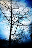 forboding drzewa Obrazy Royalty Free