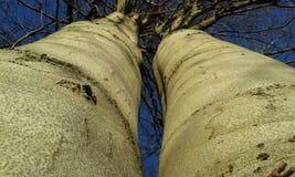 Force dans les arbres Image libre de droits