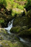 Force of nature. Small waterfalls in Quinault rain forest in Olympic National Park, Washington state Stock Photos