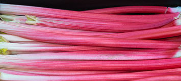Forced Rhubarb Royalty Free Stock Photos
