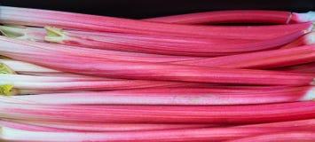 Forced Rhubarb. A tray of forced rhubarb stems Royalty Free Stock Photos
