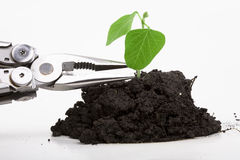 Forced seeding of plant. Forced seeding plant with pliers concept Stock Photo