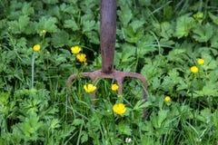 Forcella d'arrugginimento del giardino con le erbacce ed i fiori selvaggi Immagini Stock Libere da Diritti