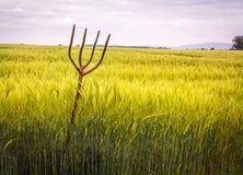 Forcella del passo nel giacimento di grano Fotografia Stock Libera da Diritti