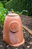 Forcer del rabarbaro - terracotta - rabarbaro Fotografie Stock