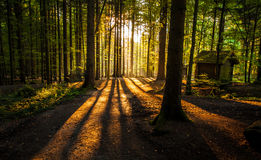 Forces of Nature. Tree and sun shows Forces of Nature Stock Photography