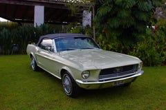 Ford Mustang Fotografia Stock Libera da Diritti