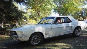 Ford Mustang branco restaurado clássico Imagem de Stock Royalty Free