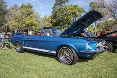 Ford Mustang GTA Royalty-vrije Stock Fotografie