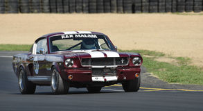 Ford Mustang race car 1965 fastback. A classic 5 liter Mustang from 1965 now a muscle car racer featuring in the Annual Classic Musclecar Festival in New Zealand Royalty Free Stock Images