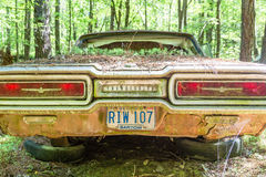 Ford Thuderbird Growing Pine Seedlings Royalty Free Stock Photos