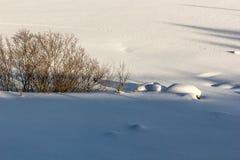 Forderung durchgesetzt durch Schnee, mit Büschen und Spuren von Tieren Lizenzfreie Stockfotografie